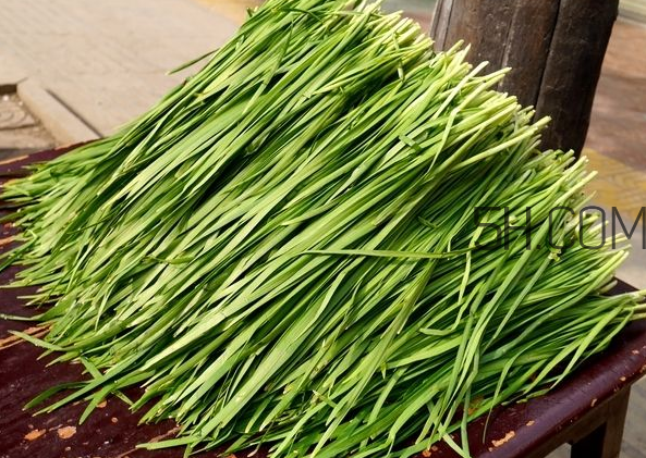 立秋后可以种韭菜吗?怎样种韭菜?