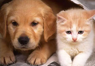 猫狗双全是什么梗?年纪轻轻猫狗双全什么意思