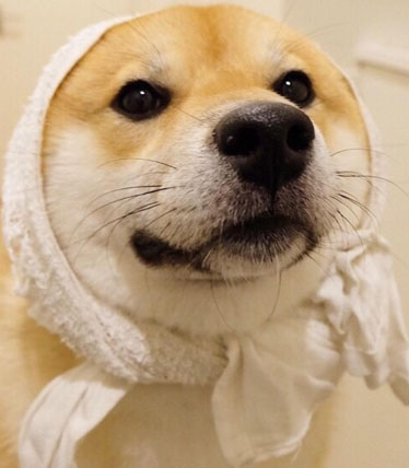 微博加狗头是什么意思?微博加狗头什么梗?