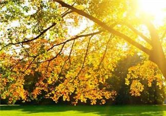秋季养肝七个小妙招 秋天减肥的方法