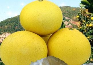 玉环文旦什么时候成熟 玉环文旦多少钱一斤