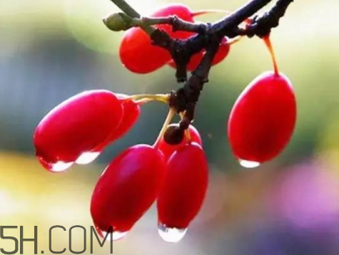 山茱萸的作用与功效图片