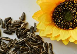 葵花籽不能和什么一起吃?葵花籽什么时候成熟