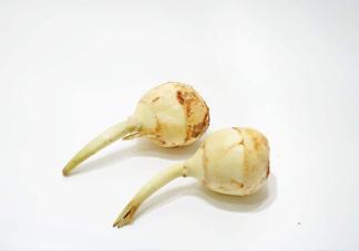 慈菇是发物吗?慈菇是马蹄吗