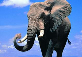 女人说大象是什么意思?女生发消息大象什么意思?