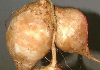 地瓜是凉性还是热性 地瓜是酸性还是碱性