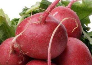 红萝卜什么时候收获 红萝卜什么季节成熟