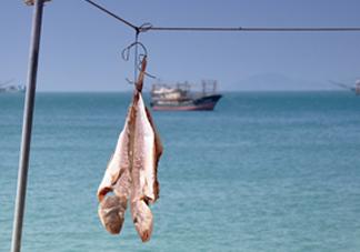 咸鱼有营养吗?咸鱼怎么腌制家常做法