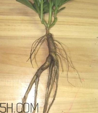土人参叶 土人参有毒吗?土人参叶子可以吃吗?