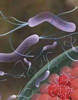 胃幽门螺旋菌阳性怎么办?幽门螺杆菌能彻底治愈吗