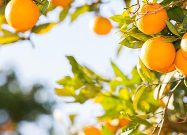 你挂在橘子树上吧什么梗?你挂在橘子树上吧我去给你买个火车站 
