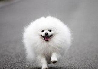 叫馒头的狗是什么品种 段子里的馒头是什么狗