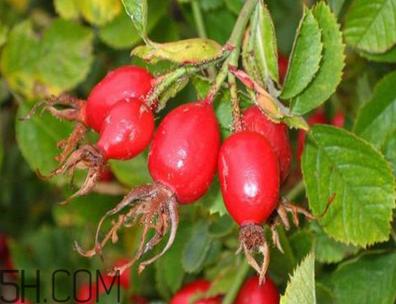 unichi玫瑰果胶囊能美白祛斑吗?unichi玫瑰果胶囊有副作用吗?