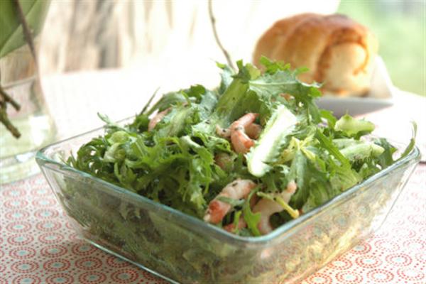 苦菊可以生吃吗?营养健康苦菊菜做法