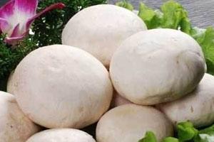 口蘑能和鸡蛋一起吃吗 营养又美味
