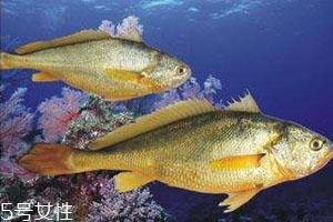 小黄鱼怎么保存 冰箱保存小黄鱼技巧