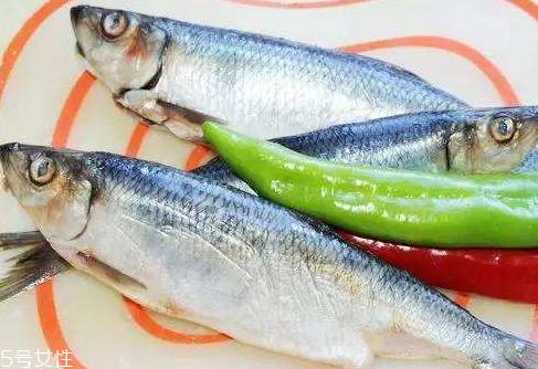 青鱼是海水鱼照样海鱼 青鱼的引见