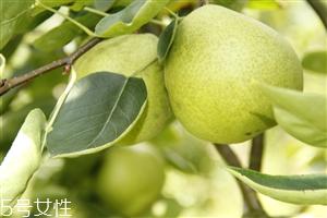 梨子煮熟吃有什么好处?熟梨的常见吃法
