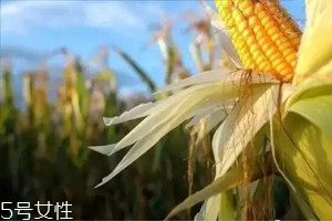 哺乳期可以喝玉米须水吗 食用无副作用