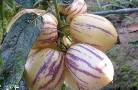 香瓜茄怎么吃 香瓜茄可以生吃吗