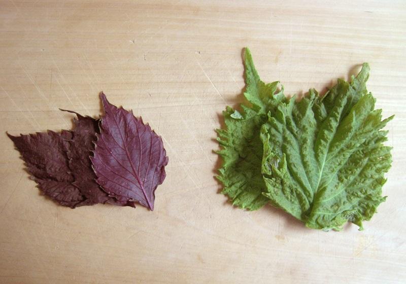 紫苏怎么保存时间更长图片