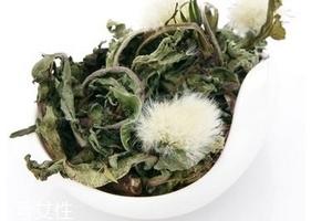 蒲公英茶怎么做?蒲公英茶做法超简单