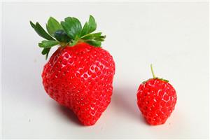 摘草莓怎么选好吃的