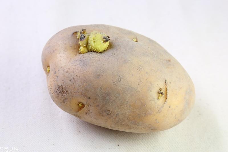 马铃薯发芽了还能吃吗 什么菜发芽不能吃