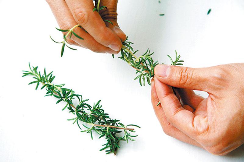 盆栽香草怎么养