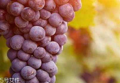 葡萄籽是什么味道?有点涩涩的