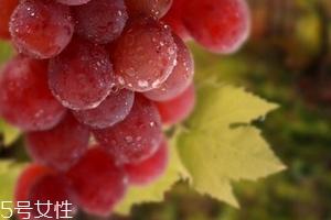 葡萄籽泡水喝有作用吗?美容保健