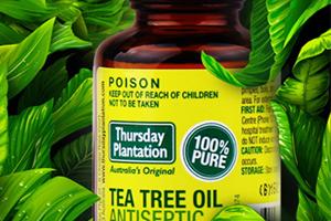过敏能用茶树精油吗图片