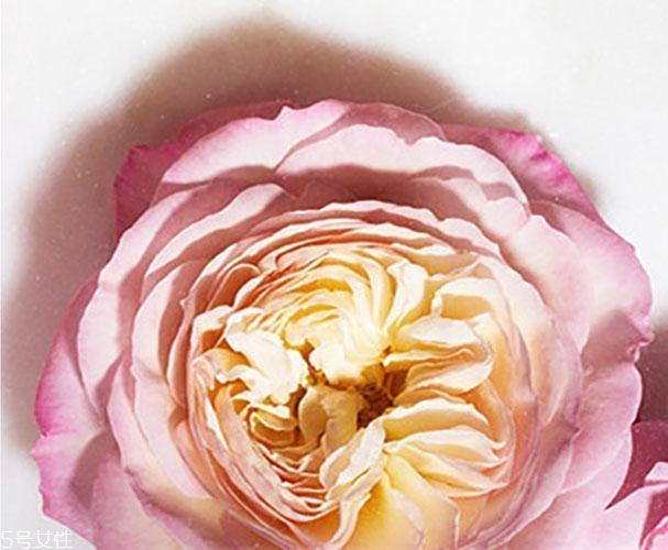 馥蕾诗玫瑰水很鸡肋吗 fresh新款玫瑰水好用吗