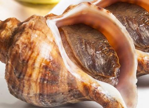 海螺哪个部位不能吃 海螺不能吃的部位图解