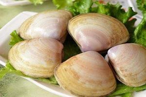 海蚌不能和什么一起吃 海蚌什么人不能吃