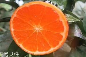 澳柑和沃柑的区别 澳柑是橘子还是橙子
