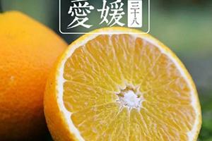 爱媛38号是橙子还是橘子?爱媛38号适合哪里种植?