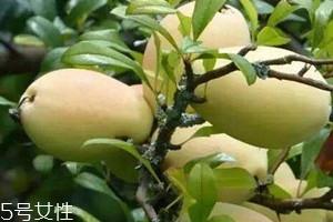 酸木瓜可以减肥吗 酸木瓜的功效