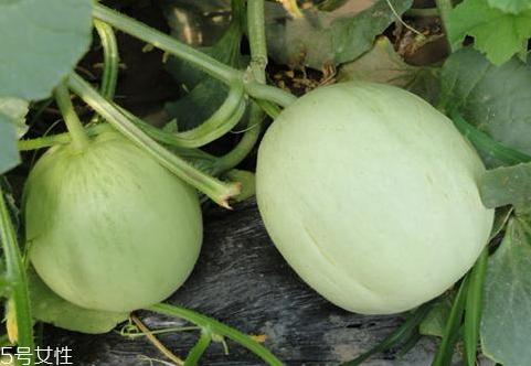 绿宝瓜孕妇能吃吗 绿宝瓜怎么吃