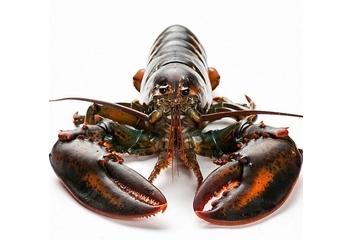 波士顿龙虾头部怎么处理?波士顿龙虾虾头处理方法