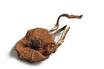 榛蘑能和豆腐一起吃吗?榛蘑豆腐的做法