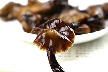 榛蘑的热量 榛蘑会让人长胖吗
