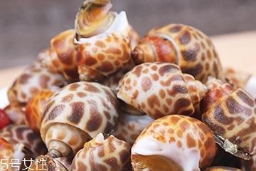 海螺能活几天?海螺无水可以活几天?