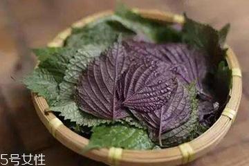 紫苏叶吃了会上火吗?紫苏叶吃了不会上火