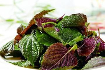 紫苏叶的热量 紫苏叶的热量高吗?