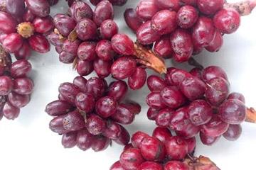 草果可以用什么代替 八角香叶和白芷