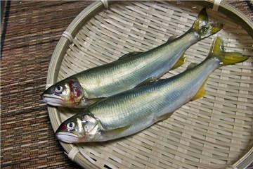 新鲜香鱼怎么挑选与保存