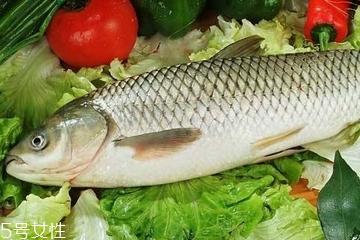 草鱼是发物吗 鱼类都是发物