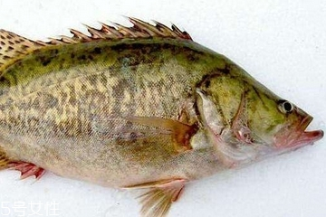 桂鱼为什么那么贵 物以稀为贵