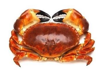 面包蟹为什么便宜 品质有好有坏